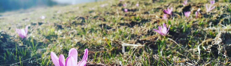 Lichtblume Eischoll by Nadja Imboden
